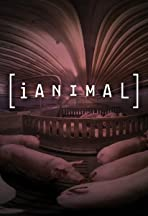 iAnimal: Through the Eyes of a Pig