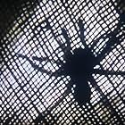 Tarantulas: The Deadly Cargo (1977)