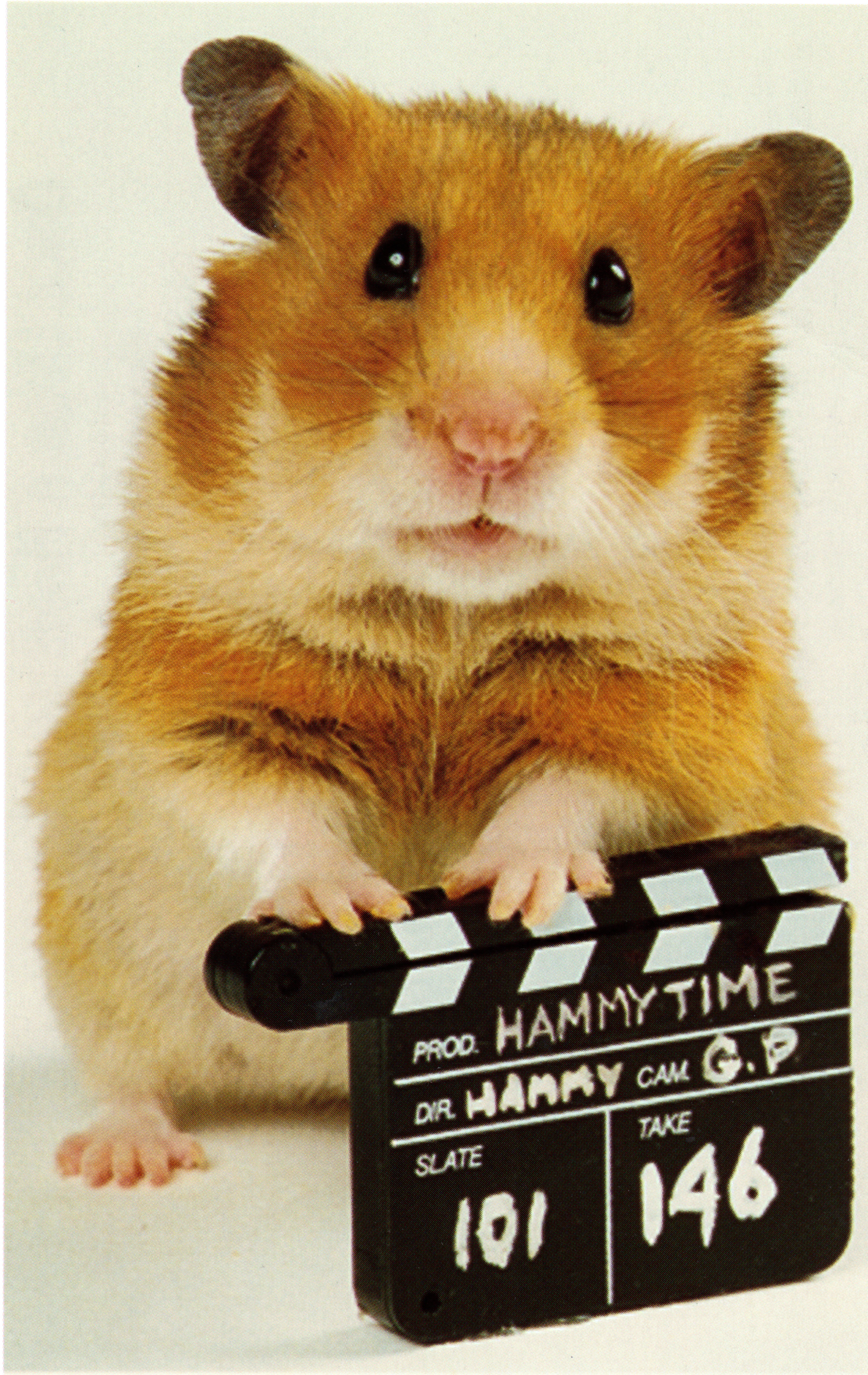Once Upon A Hamster Tv Series 1995 Imdb