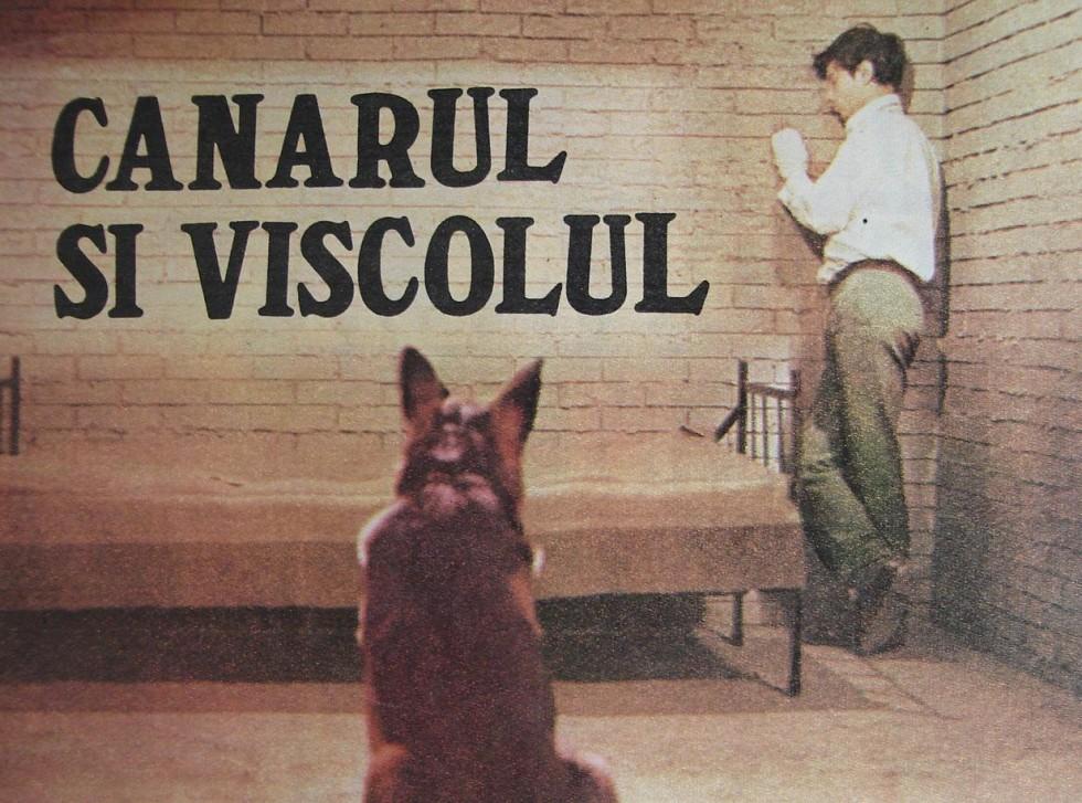 Canarul si viscolul (1970)