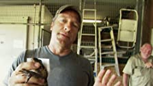 Deadly Snake Wrangler