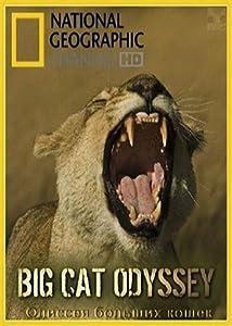 A funny movie to watch Big Cat Odyssey USA [720p]