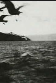 Feeding Sea Gulls Poster