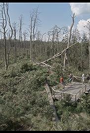 Filmas Rūgštus miškas (2018)