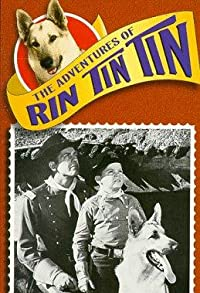 Primary photo for The Adventures of Rin Tin Tin