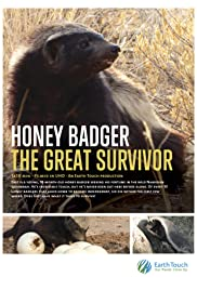 Honey Badger The Great Survivor