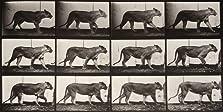 Lioness Walking (1887)