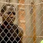 Laurence Mason in Prison Break (2005)