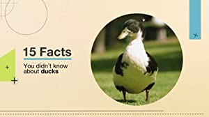 15 Facts You Didn't Know About Ducks