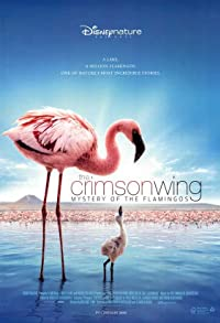 Primary photo for The Crimson Wing: Mystery of the Flamingos