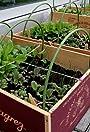 Adventures of an Urban Gardening Nerd