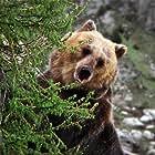 Bozo the Bear