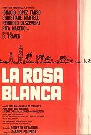 Rosa blanca Poster