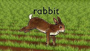 Where to stream Rabbit