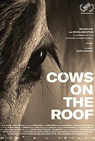 Primary photo for Anche stanotte le mucche danzeranno sul tetto