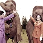 Rajesh Khanna and Tanuja in Haathi Mere Saathi (1971)