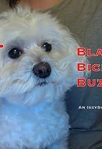 Blanche's Bichon Buzz