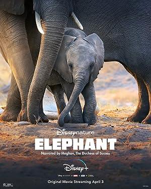 مشاهدة فيلم Elephant 2020 مترجم أونلاين مترجم