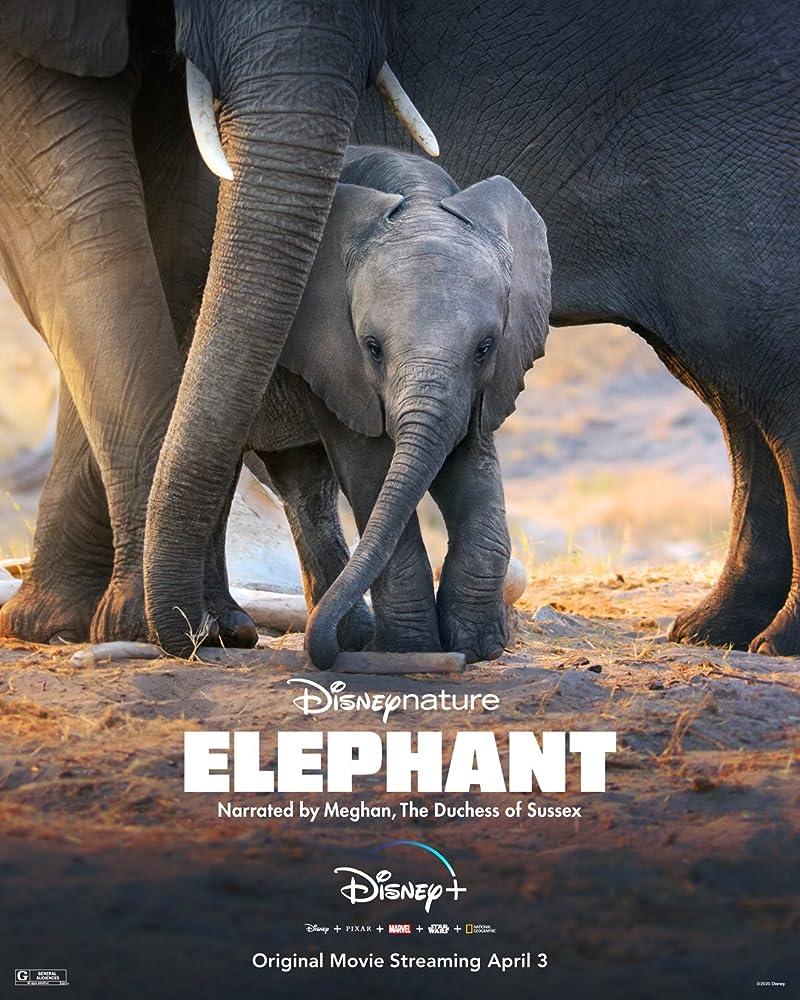 Elephant (2020) download