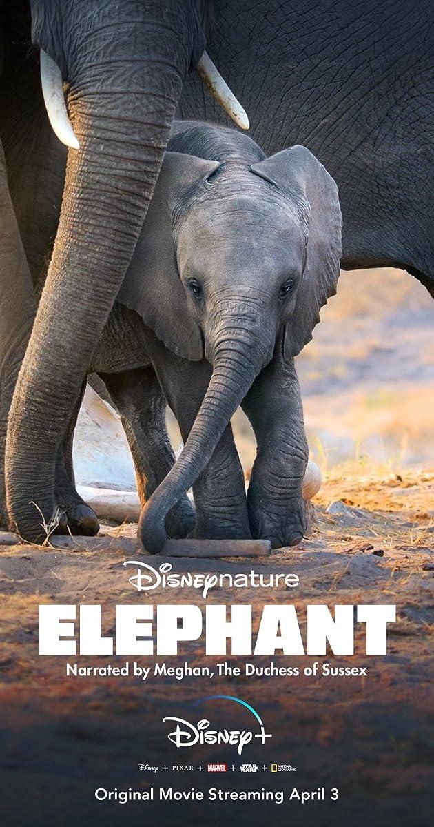Subtitle of Elephant