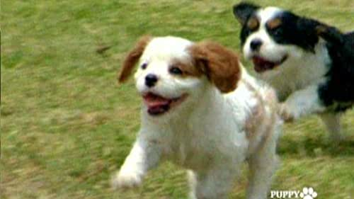 Puppy Party: Complete Series