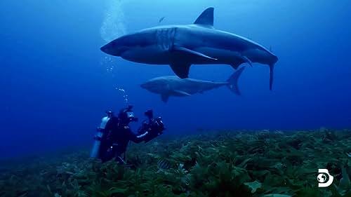 Shark Week: Isle Of Jaws: Blood Brothers