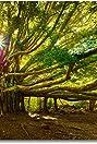 The Tree Artist