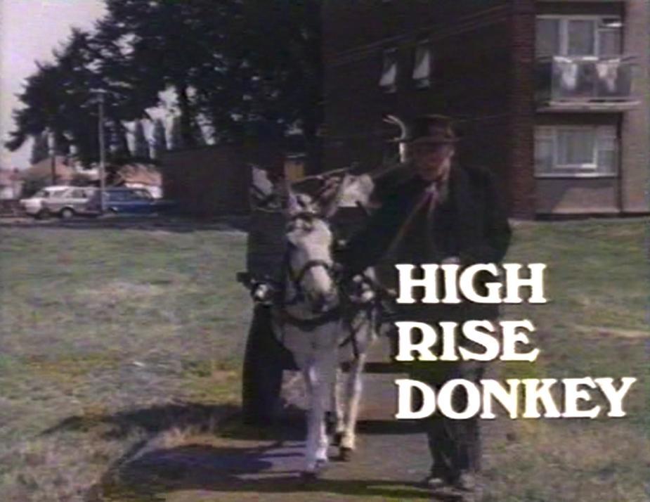High Rise Donkey (1980)