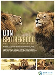 Action movies downloads Lion Brotherhood South Africa [UHD]