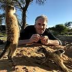 Gordon Buchanan in Animals with Cameras (2018)