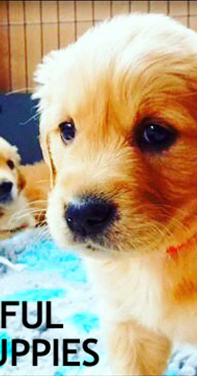 The Wonderful World of Puppies (TV Series 2018– ) - IMDb