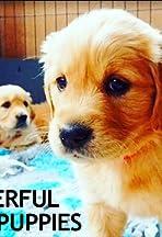 The Wonderful World of Puppies