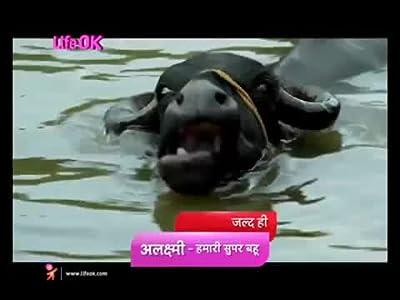 Watch english movies live online Alaxmi: Hamari Super Bahu [320x240]