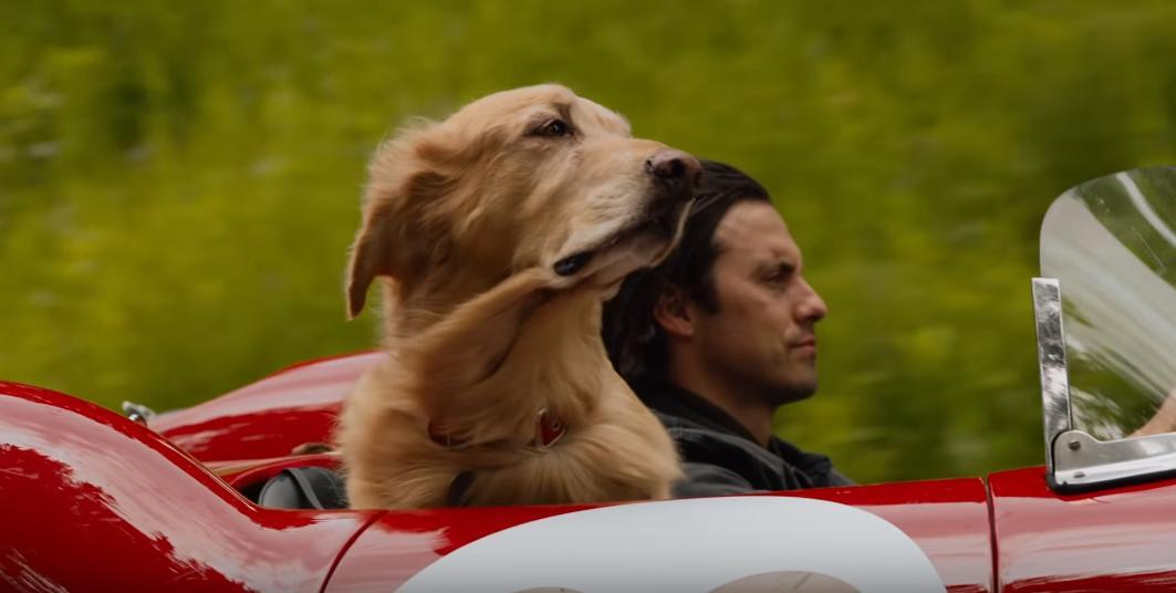 Milo Ventimiglia and Butler in The Art of Racing in the Rain (2019)