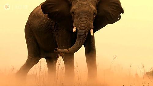 Nature: Okavango: River Of Dreams, Episode 3: Inferno