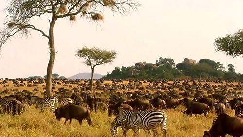 Nature: The Serengeti Rules