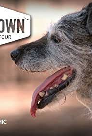 DogTown (2008)