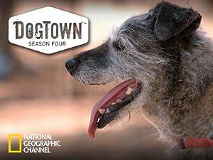 Where to stream DogTown