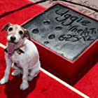 Uggie at an event for The Artist (2011)