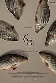 6 stora fiskar Poster