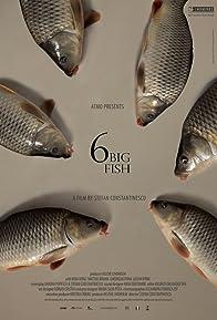 Primary photo for 6 stora fiskar