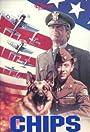 Chips, the War Dog