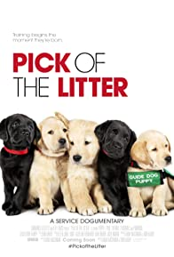 Primary photo for Pick of the Litter