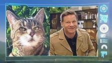 Andy e il gatto selvatico