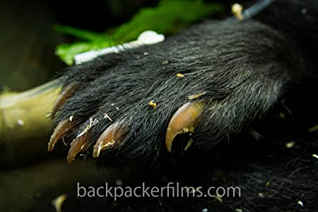 English movie single link downloads Wild Earth! The Andean Bear Story by none [hd720p]