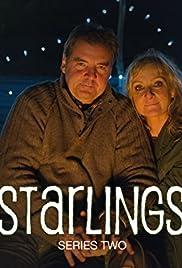 Starlings Poster