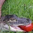 Crocodile Feeding Frenzy (2008)