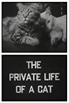 The Private Life of a Cat (1946) Poster