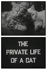 The Private Life of a Cat Maya Deren