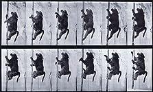 Baboon Climbing a Pole (1887)